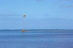 Île tropicale minuscule avec un palmier simple Images libres de droits