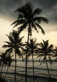 Île tropicale, Sri Lanka Photos stock