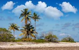 Île tropicale Zones et palmiers de corail Photo stock