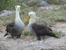 Îles de Galapgos Photos stock