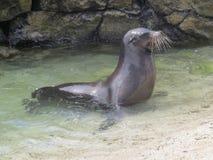 Îles de Galapgos Images libres de droits