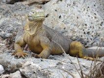 Îles de Galapgos Photographie stock libre de droits