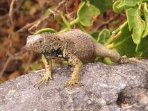 Îles de Galapgos Images stock