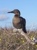 Îles de Galapgos Image libre de droits