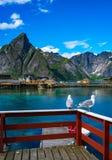 Îles Norvège d'îles d'archipel de Lofoten Photos libres de droits