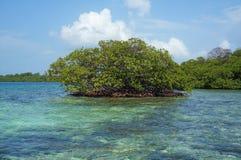 Îlot d'arbre de palétuvier en mer des Caraïbes Photographie stock libre de droits