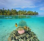 Îlot tropical avec des poissons d'anémone sous-marins Photo stock