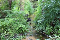 Ρεύμα που ρέει στην αγριότητα της Φλώριδας στοκ εικόνα με δικαίωμα ελεύθερης χρήσης