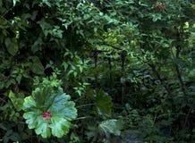 Ρομαντική σχάρα με την πράσινη χλόη στοκ φωτογραφία με δικαίωμα ελεύθερης χρήσης