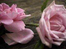 Ρόδινα τριαντάφυλλα στο παλαιό ξύλινο πάτωμα στοκ εικόνες