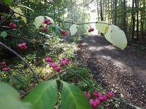 Ρόδινο ανθίζοντας δέντρο σε ένα δάσος στοκ φωτογραφία με δικαίωμα ελεύθερης χρήσης