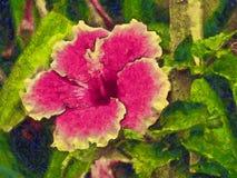 Ρόδινο λουλούδι hollyhock σε έναν κήπο στοκ εικόνες