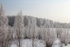 Ρωσικές διαδρομές σκι σημύδων παγετού οδικού χιονιού δέντρων χιονιού της χειμερινής Σιβηρίας δασικές στο χιόνι στοκ φωτογραφίες με δικαίωμα ελεύθερης χρήσης