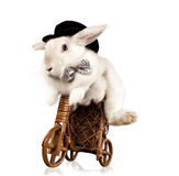 �ute rabbit riding bike Stock Images