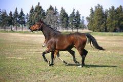Όμορφα thoroughbred φοράδα και foal που βόσκουν και που παίζουν μαζί στο αγροτικό ιππικό αγρόκτημα στοκ εικόνα με δικαίωμα ελεύθερης χρήσης