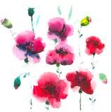 Όμορφες ανθίζοντας κόκκινες παπαρούνες Αιωρούνται σίγουρα στον αέρα και σύντομα όλοι θα απομακρύνουν διανυσματική απεικόνιση