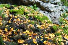Όμορφες εικόνες φθινοπώρου Tata του αγγλικού πάρκου στοκ εικόνα