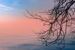 Όμορφη άποψη ηλιοβασιλέματος της λίμνης Garda σε ένα ομιχλώδες βράδυ μέσω ενός κλάδου δέντρων Στην απόσταση μπορείτε να δείτε τη  στοκ φωτογραφίες