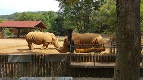 Όμορφη θέση στο ζωολογικό κήπο της Κορέας στοκ εικόνες