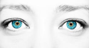 Όμορφος ένας οξυδερκής φαίνεται μάτι γυναικών Κλείστε αυξημένος στοκ εικόνες