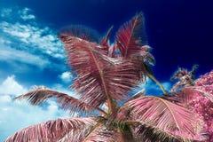 Όμορφος υπέρυθρος πυροβολισμός των φοινίκων στο νησί Σεϋχέλλες παραδείσου στοκ φωτογραφίες