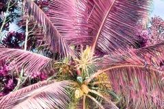 Όμορφος υπέρυθρος πυροβολισμός των φοινίκων στο νησί Σεϋχέλλες παραδείσου στοκ εικόνες