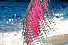 Όμορφος υπέρυθρος πυροβολισμός των φοινίκων στο νησί Σεϋχέλλες παραδείσου στοκ εικόνες με δικαίωμα ελεύθερης χρήσης