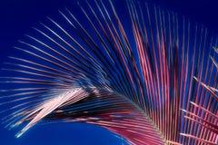 Όμορφος υπέρυθρος πυροβολισμός των φοινίκων στο νησί Σεϋχέλλες παραδείσου στοκ εικόνα
