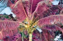 Όμορφος υπέρυθρος πυροβολισμός των φοινίκων στο νησί Σεϋχέλλες παραδείσου στοκ φωτογραφίες με δικαίωμα ελεύθερης χρήσης
