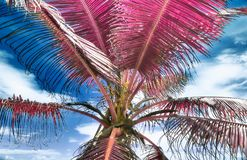 Όμορφος υπέρυθρος πυροβολισμός των φοινίκων στο νησί Σεϋχέλλες παραδείσου στοκ φωτογραφία