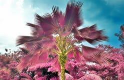 Όμορφος υπέρυθρος πυροβολισμός των φοινίκων στο νησί Σεϋχέλλες παραδείσου στοκ εικόνα με δικαίωμα ελεύθερης χρήσης