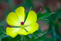 Όμορφο κίτρινο λουλούδι με το πράσινο υπόβαθρο στοκ φωτογραφία με δικαίωμα ελεύθερης χρήσης