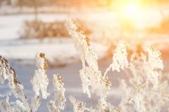 όμορφο χειμερινό τοπίο με τις εγκαταστάσεις, τα δέντρα και την ανατολή χιονιού winterly πρωί μιας νέας ημέρας πορφυρό χειμερινό τ στοκ φωτογραφία