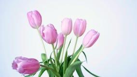 Όμορφο boquet των ρόδινων τουλιπών, tulipa Liliaceae Lilieae, με τα πράσινα φύλλα απόθεμα βίντεο