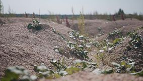 Όμορφο cinematic σχέδιο των μικρών δύσκολων γήινων λόφων έρημος judean φιλμ μικρού μήκους