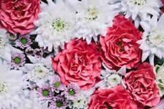 Όμορφο floral υπόβαθρο με το τριαντάφυλλο και το άσπρο χρυσάνθεμο στοκ εικόνα με δικαίωμα ελεύθερης χρήσης