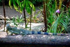 Όργανο ελέγχου νερού, Σιγκαπούρη στοκ εικόνα
