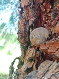 Σαλιγκάρι σε ένα δέντρο στοκ φωτογραφία με δικαίωμα ελεύθερης χρήσης