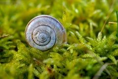 Σαλιγκάρι στη φύση στοκ φωτογραφίες με δικαίωμα ελεύθερης χρήσης