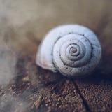 Σαλιγκάρι στη φύση στοκ φωτογραφίες