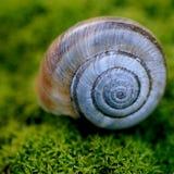 Σαλιγκάρι στη φύση στοκ εικόνες με δικαίωμα ελεύθερης χρήσης