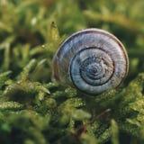 Σαλιγκάρι στη φύση στοκ εικόνα