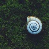 Σαλιγκάρι στη φύση στοκ φωτογραφία με δικαίωμα ελεύθερης χρήσης