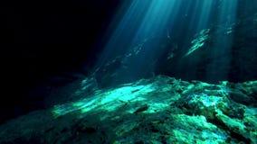 Σκάφανδρο που βουτά στη EL Jardin del Ίντεν cenote κοντά σε Tulum στο Μεξικό απόθεμα βίντεο