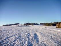 Σκανδιναβικά να κάνει σκι ίχνη στις χιονώδεις πεδιάδες με τα κωνοφόρα δέντρα κοντά στο NA Morave Nove Mesto στοκ φωτογραφία με δικαίωμα ελεύθερης χρήσης