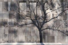 Σκιά δέντρων στον τοίχο ενός σύγχρονου κτηρίου στοκ εικόνες