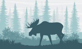 σκιαγραφία Άλκες με τα μεγάλα κέρατα στο υπόβαθρο των καναδικών δέντρων έλατου απεικόνιση αποθεμάτων