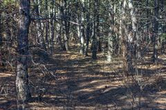 Σκληρός ουκρανικός χειμώνας στο δάσος στοκ φωτογραφίες