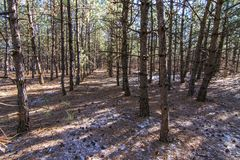 Σκληρός ουκρανικός χειμώνας στο δάσος στοκ φωτογραφία