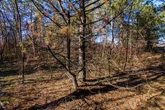 Σκληρός ουκρανικός χειμώνας στο δάσος στοκ φωτογραφία με δικαίωμα ελεύθερης χρήσης